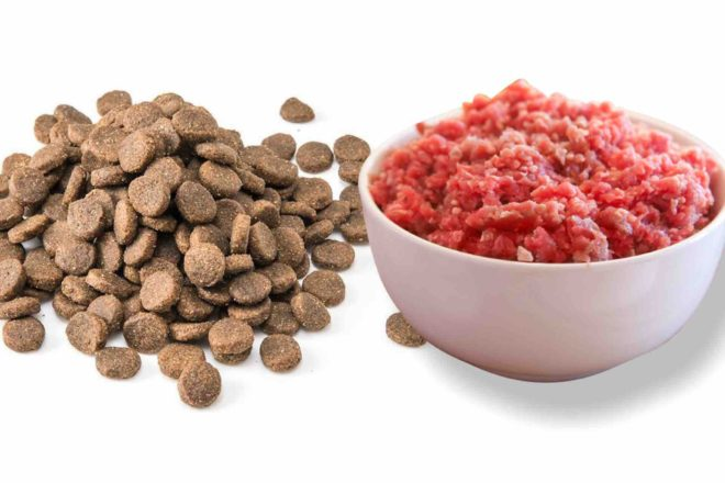 How to Transition Your Dog to a Raw Diet