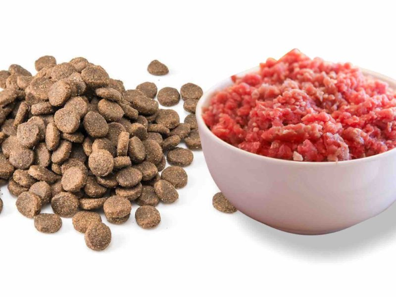 Transition dog from dry dog food to raw dog food