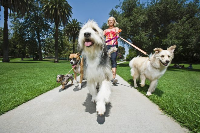 Dog Lover - Unusual Gifts for Dog Lovers